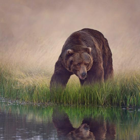 Immagine della categoria per Animali