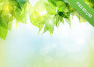 Bokeh-spring-leaves-vector-background
