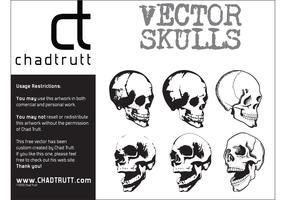 Human Skulls 2