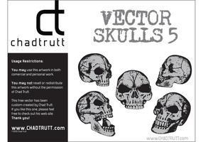 Human Skulls 5