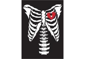Free Vector Bone