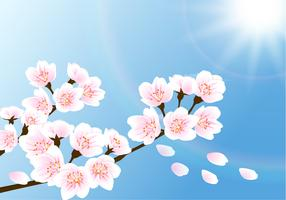 Cherry Blossom Wallpaper Vector