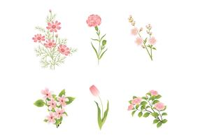 Various Pink Flower Vectors