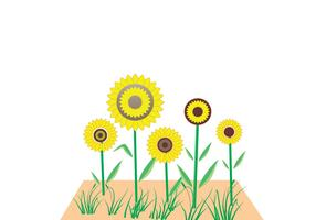 Sunflower Vector (Tutorial Available)