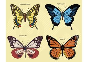 Butterflies Footage