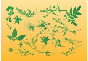 Plants Vector Graphics