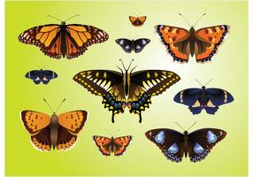 Realistic Butterfly Vectors