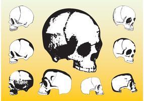 Free Skulls Vector Packs