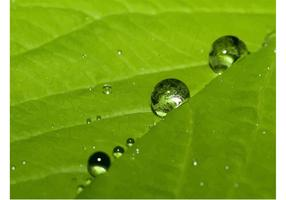 Nature Dew Drops