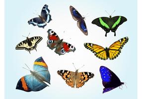 Free Butterfly Vectors