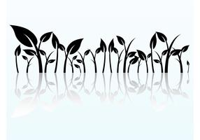 Reflected Plant Graphics