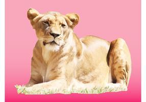 Female Lion Vector