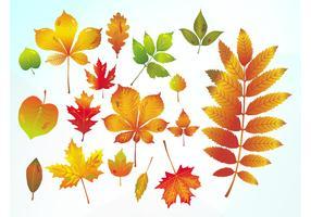 Autumn Vector Leaves