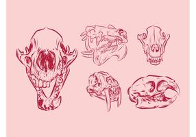 Animal Skulls
