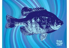 Fish Vector Graphics