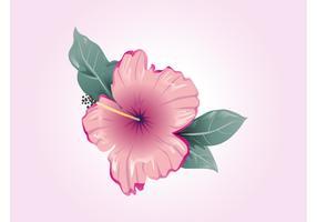 Hibiscus Vector