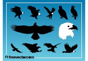 Eagles Vector Graphics