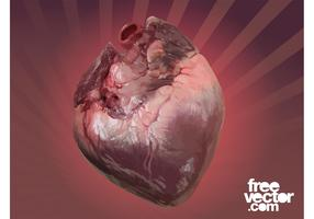Human Heart Vector Graphic