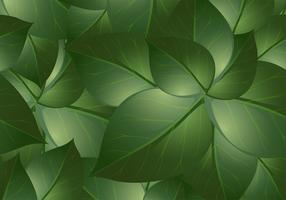 Green Leaf Background Vectors