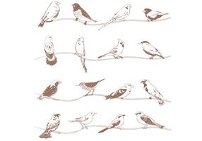 Hand Drawn Birds Vectors