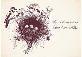 Free Hand Drawn Bird In Nest Vector