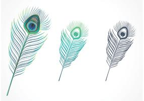 Free Isolated Peacock Feather Vector
