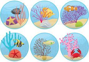 Mini Coral Reefs