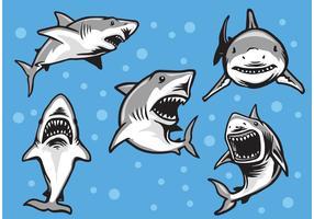 Great White Shark Vectors