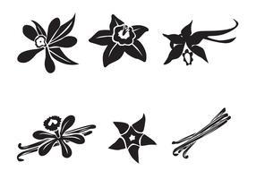 Free Vector Vanilla Flower
