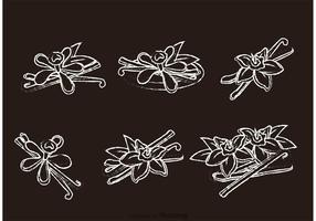 Chalk Drawn Vanilla Flower Vectors