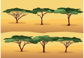 Acacia Tree Vectors
