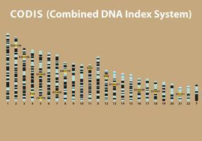 DNA Codis Vector