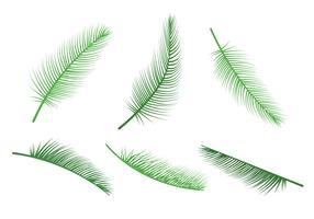 Palm Leaf Vectors