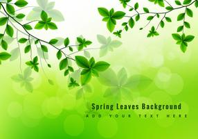 Green spring leaves