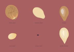 Seed Types Set