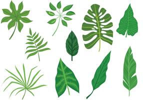 Free-Tropical-Leaves-Vectors