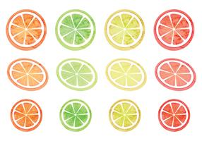Vector Set of Citruses