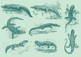 Lizards And Gators