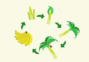 FREE BANANA LIFE CYCLE VECTOR