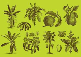 Fruit Trees drawings