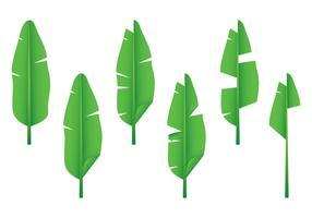 Realistic Banana Leaf Vectors