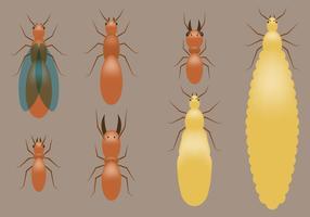 Termites Vectors