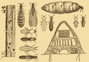 Old Style Drawing Termite Vectors