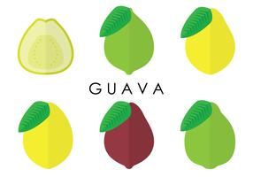Guava Variants Vectors