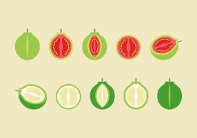 Free Guava Vector