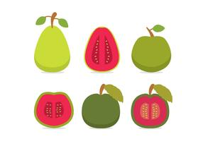 Guava Vector Side Views
