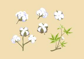 FREE COTTON PLANT VECTOR