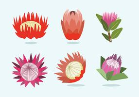 Protea Flower Vector