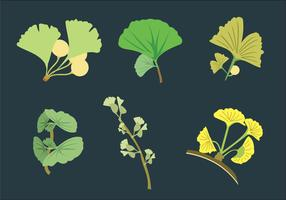 Ginko Leaves Vector