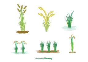 Free Rice Plant Vector